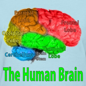 The Human Brain - Women's T-Shirt