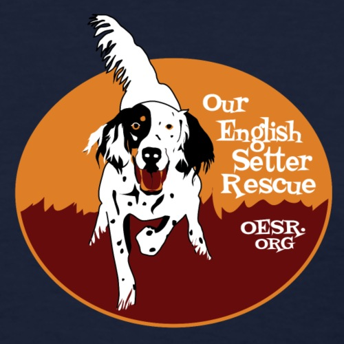 Tri-color english Setter
