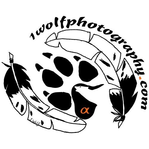 1WP Wolf paw feathers 3 c