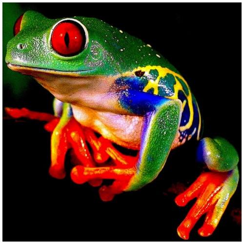 Frog Art Deco