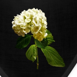 Single White Hydrangea - Bandana
