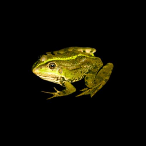 Frog in Hot Water