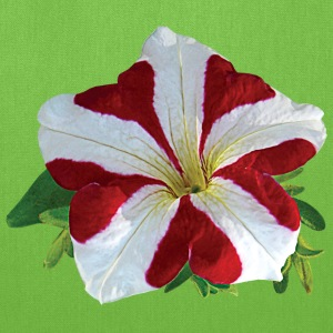 Red and White Petunia Bags & backpacks - Tote Bag