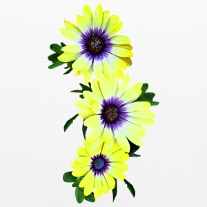 African Daisies Lemon Symphony Other - Pillowcase