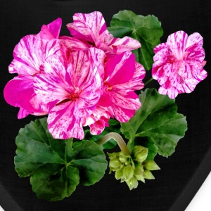Two Pink and White Striped Geraniums Caps - Bandana