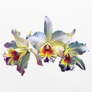 Three White Orchids Case Other - Pillowcase