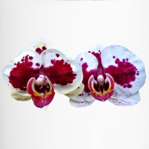 Maroon And White Phalaenopsis Orchids Side By Side Mugs & Drinkware - Travel Mug