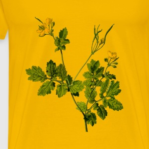 Greater celandine (detailed) - Men's Premium T-Shirt