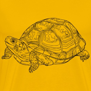 Eastern box turtle - Men's Premium T-Shirt