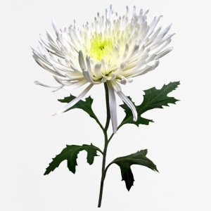 White Spider Mum Other - Mouse pad Vertical