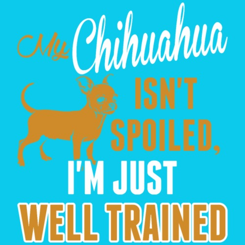 My Chihuahua Isnt Spoiled Im Just Well Trained