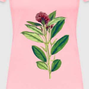 Dwarf red combretum - Women's Premium T-Shirt