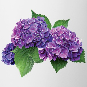Purple Hydrangea Mugs & Drinkware - Coffee/Tea Mug