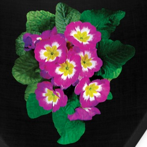 Pink Primroses Seen From Above Caps - Bandana