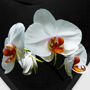 White Orchids With Orange Caps - Bandana