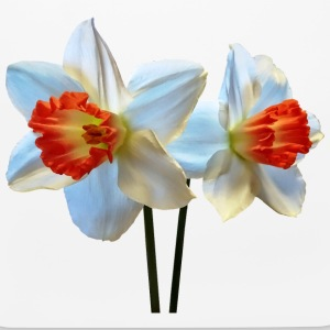 Two White And Orange Daffodils Other - Mouse pad Horizontal