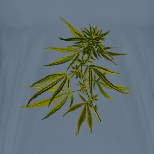 Cannabis (detailed) - Men's Premium T-Shirt