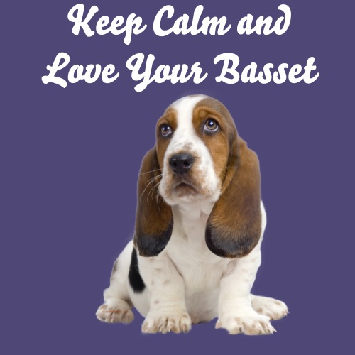 Adorable Basset