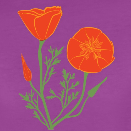 Poppies illustration with no background