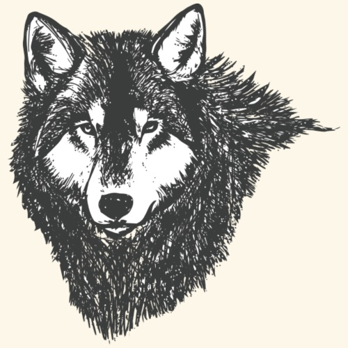 Wolf, Wolves, Wildlife, Nature, Hunt, Hunting