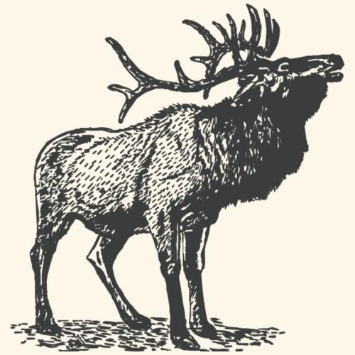 Deer, Antlers, Wildlife, Outdoor, Vintage, Hipster