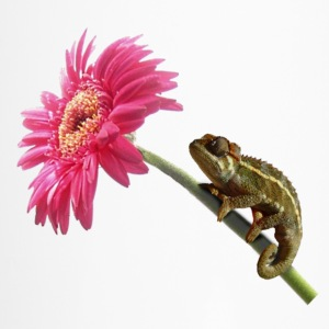 Chameleon lizard on hot pink flower Bottles & Mugs - Travel Mug
