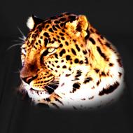 Design ~ Leopard
