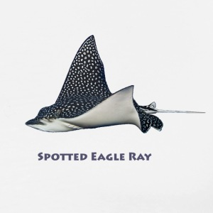 Spotted Eagle Rays.  - Men's Premium T-Shirt