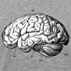 Anatomically Correct Brain