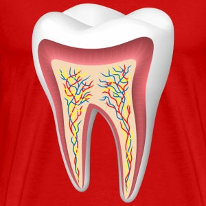 human tooth sectional tooth - Men's Premium T-Shirt