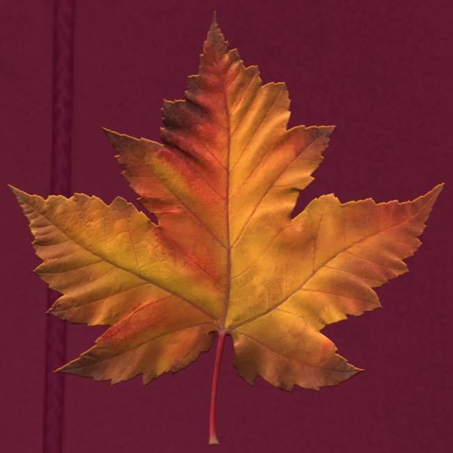 Men's Canada Souvenir Hoodie Maple Leaf Hooded Jacket