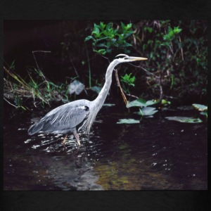Great Blue Heron in Everglades National Park, FL - Men's T-Shirt