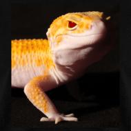 Design ~ The Raptor