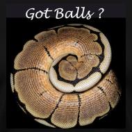 Design ~ Got Balls ?