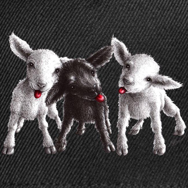 Three little cheeky sheep