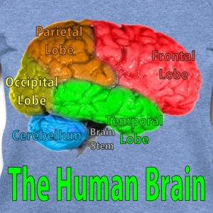 The Human Brain - Women's Wideneck Sweatshirt
