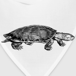 Yellow spotted river turtle - Bandana