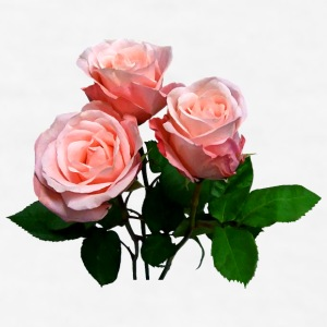 Three Light Pink Roses Accessories - Men's T-Shirt