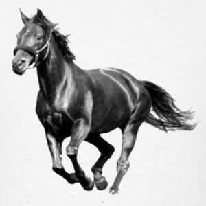 Black Stallion - Men's T-Shirt