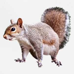 squirrel clipart 2 - Adjustable Apron
