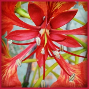 Red Flower - Adjustable Apron