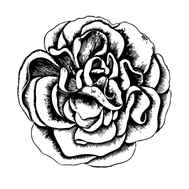 Buttercup Rose