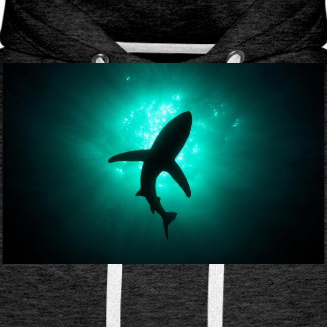 Shark in the abbis