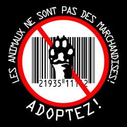 Les animaux ne sont pas des marchandises! adoptez!