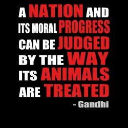 A nation and its moral progress can be judged by the way its animals are treated (Gandhi )