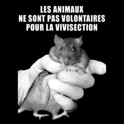 Les animaux ne sont pas volontaires pour la vivisection