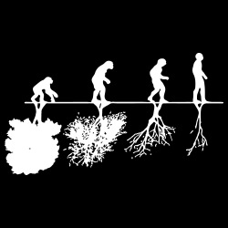 Human evolution and the destruction of the environment