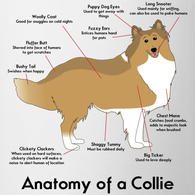 Anatomy of a Collie