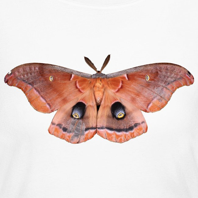 RED LUNA MOTH