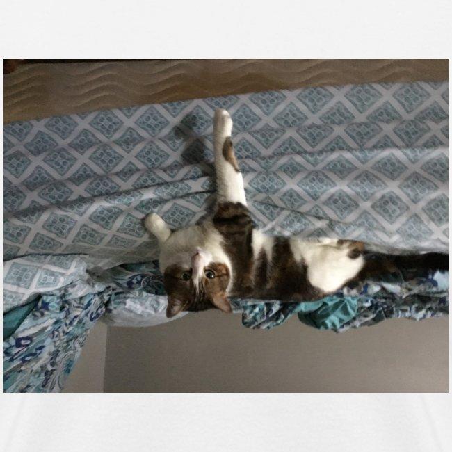 Lol da upside down fat cat